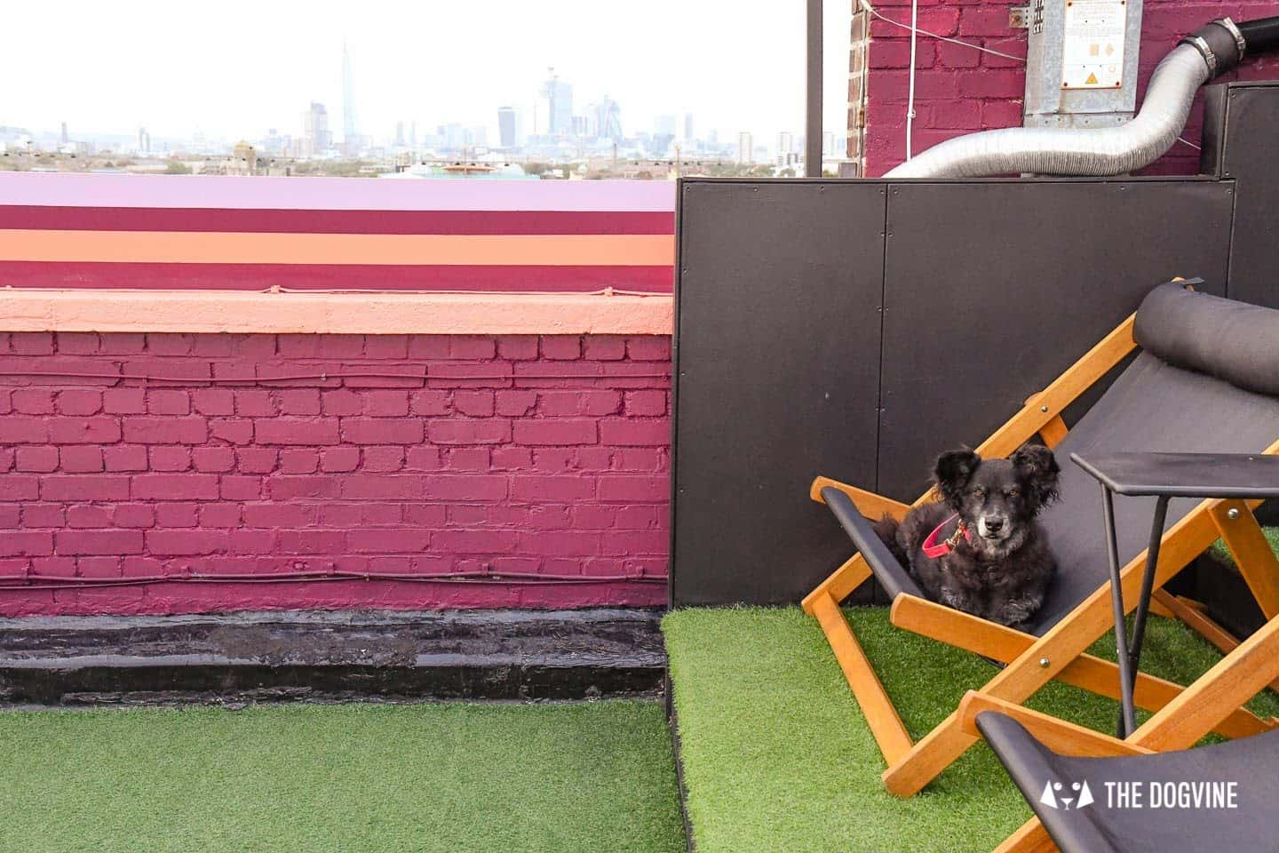 Spectacular Movie Moments at the Dog-friendly Rooftop Film Club 17