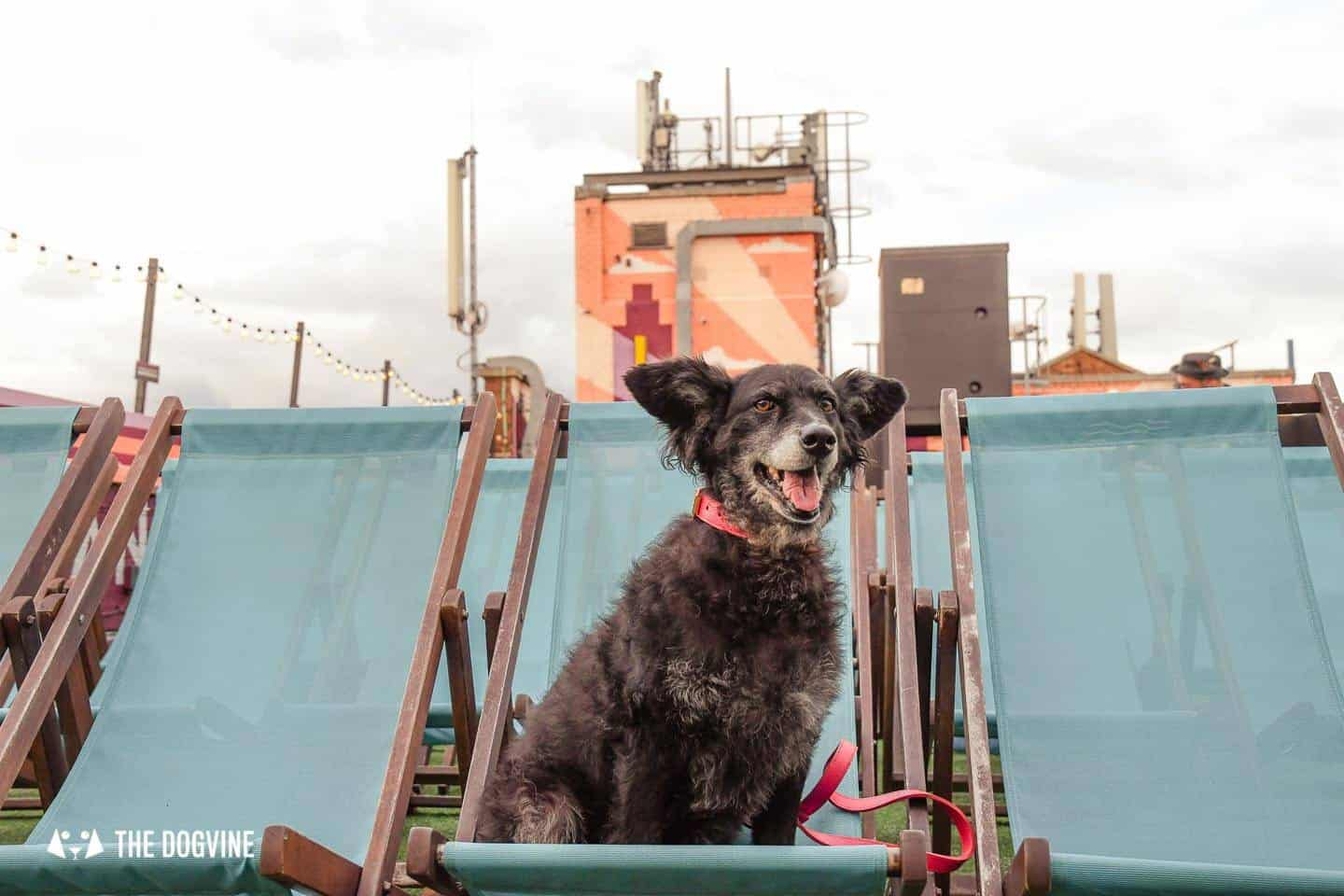 Spectacular Movie Moments at the Dog-friendly Rooftop Film Club 18
