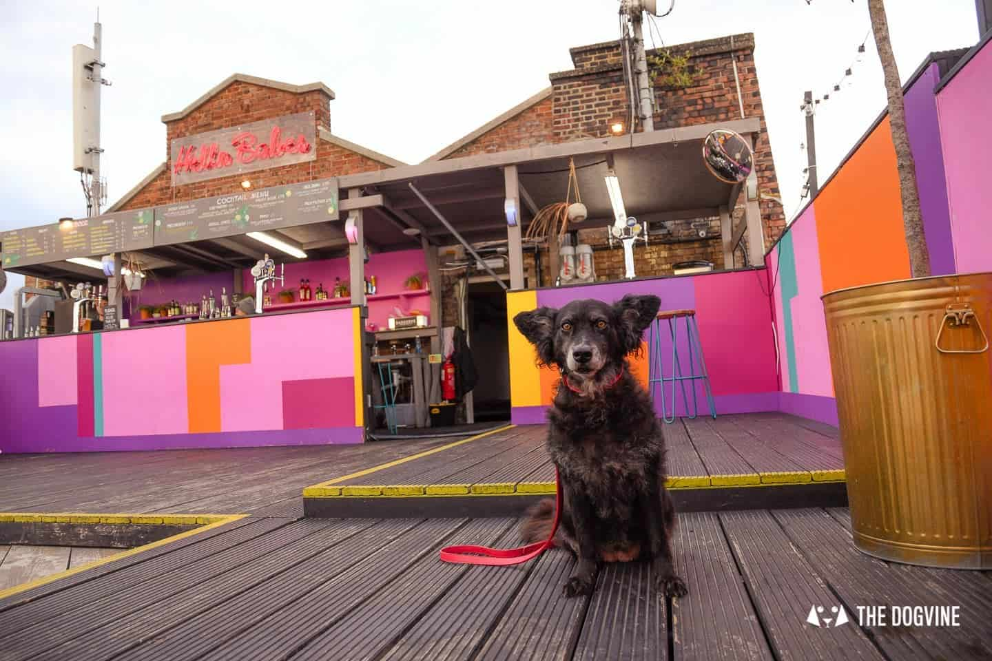 Spectacular Movie Moments at the Dog-friendly Rooftop Film Club 2
