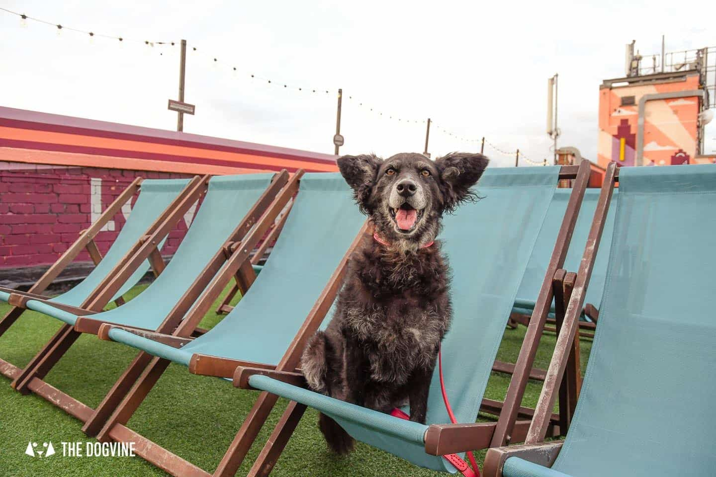 Spectacular Movie Moments at the Dog-friendly Rooftop Film Club 21