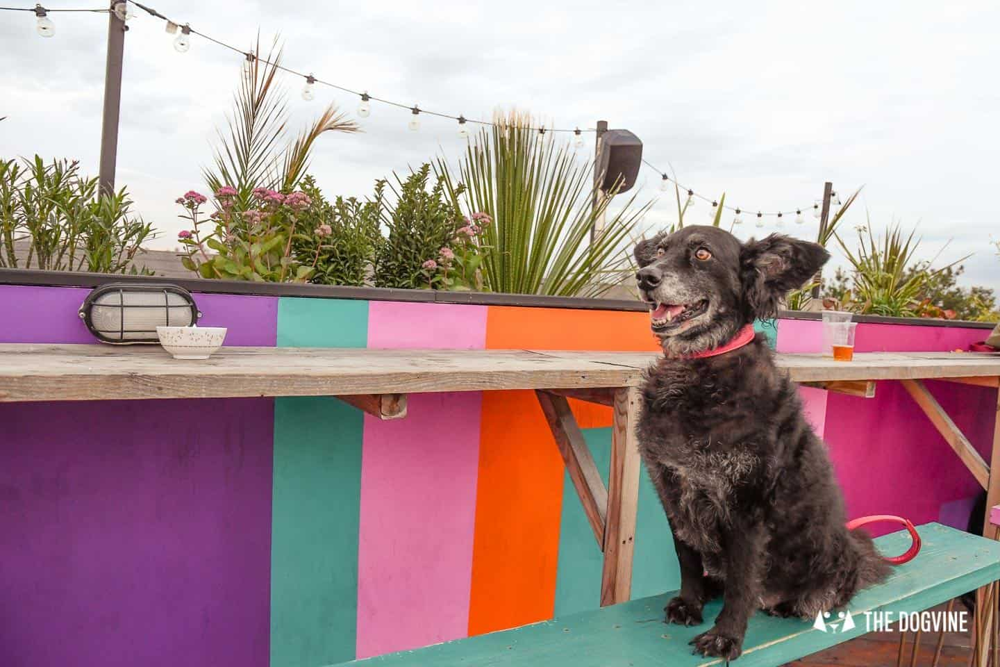 Spectacular Movie Moments at the Dog-friendly Rooftop Film Club 26