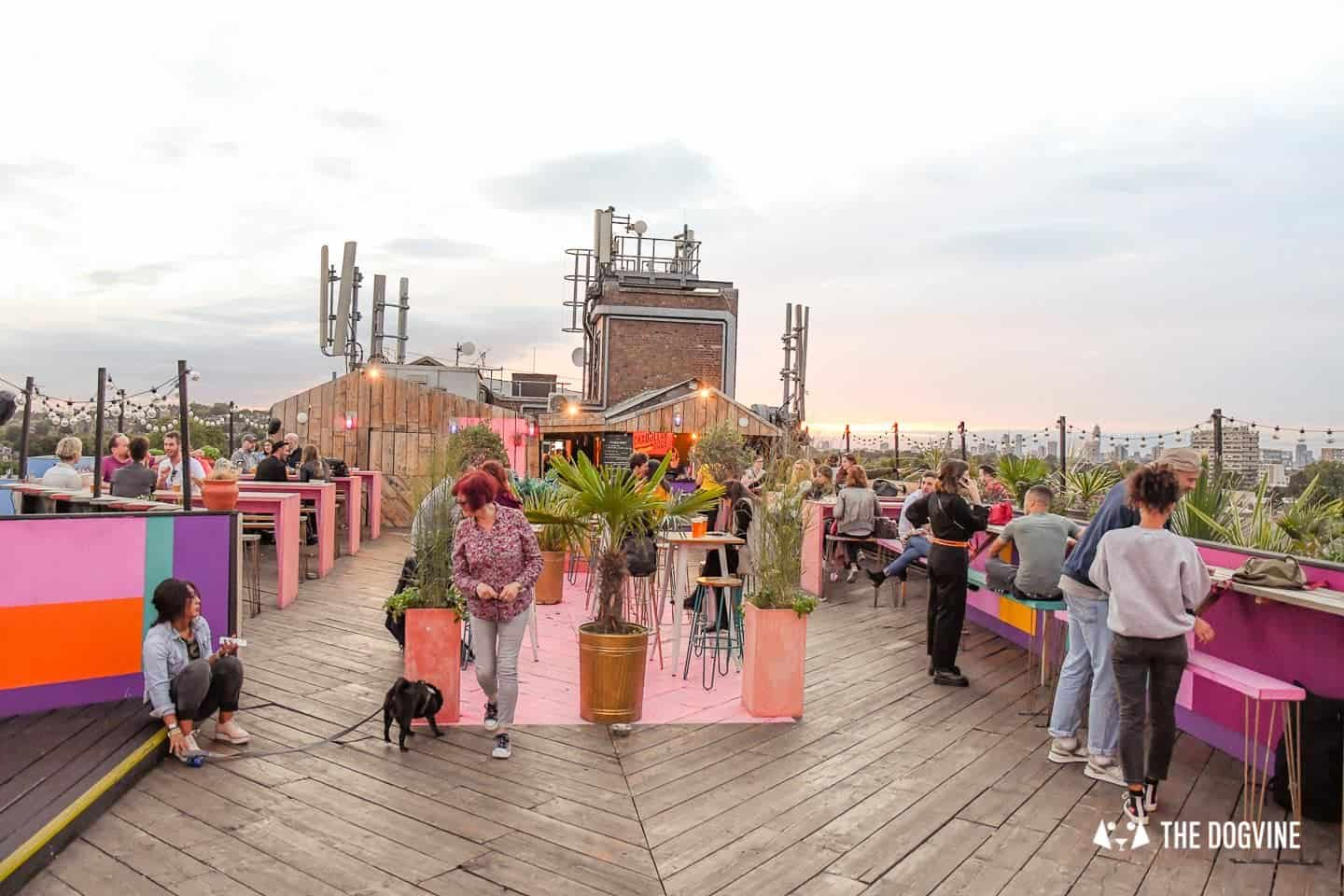Spectacular Movie Moments at the Dog-friendly Rooftop Film Club 29