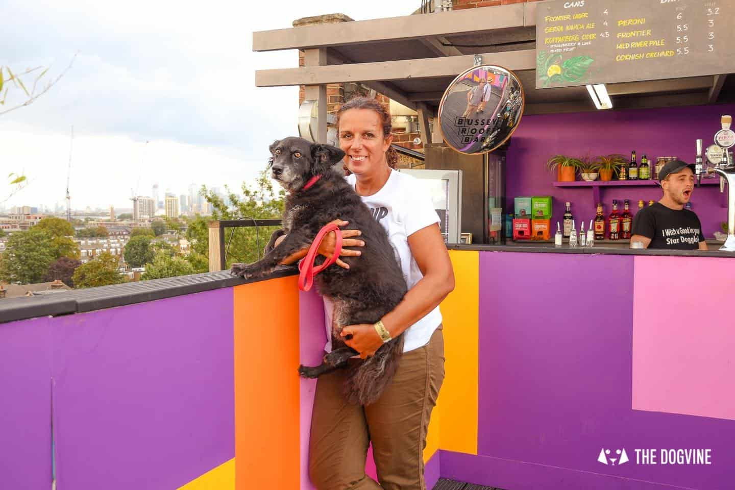 Spectacular Movie Moments at the Dog-friendly Rooftop Film Club 3