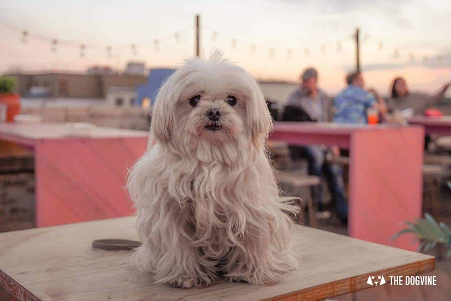 Spectacular Movie Moments at the Dog-friendly Rooftop Film Club 32