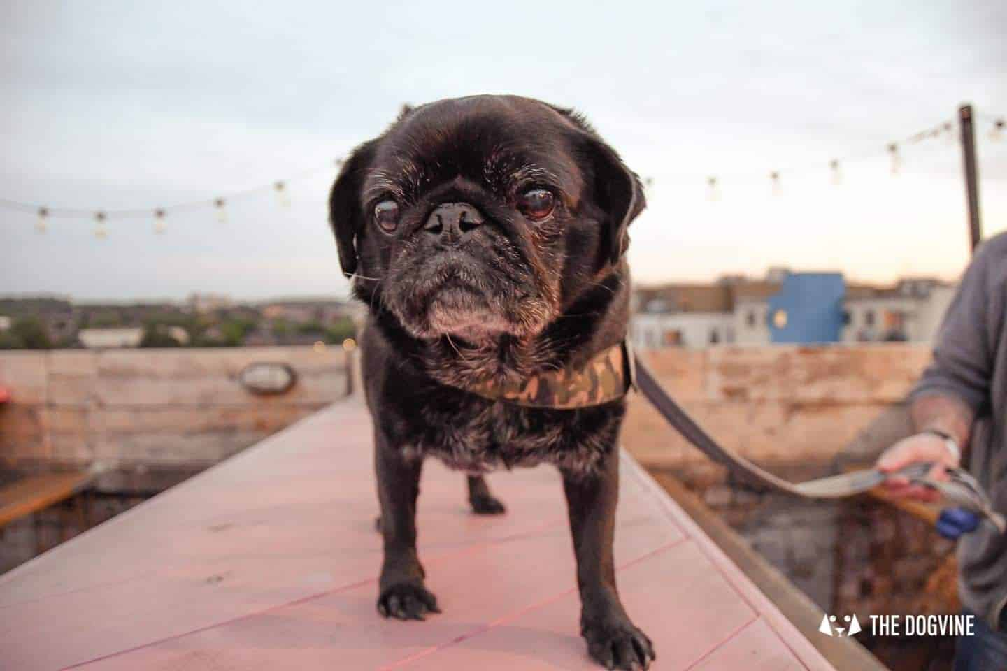 Spectacular Movie Moments at the Dog-friendly Rooftop Film Club 39