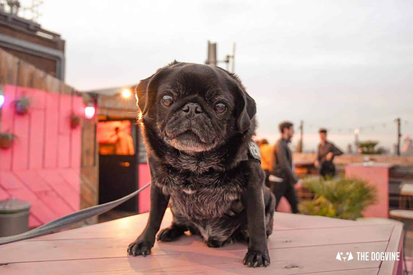 Spectacular Movie Moments at the Dog-friendly Rooftop Film Club 42