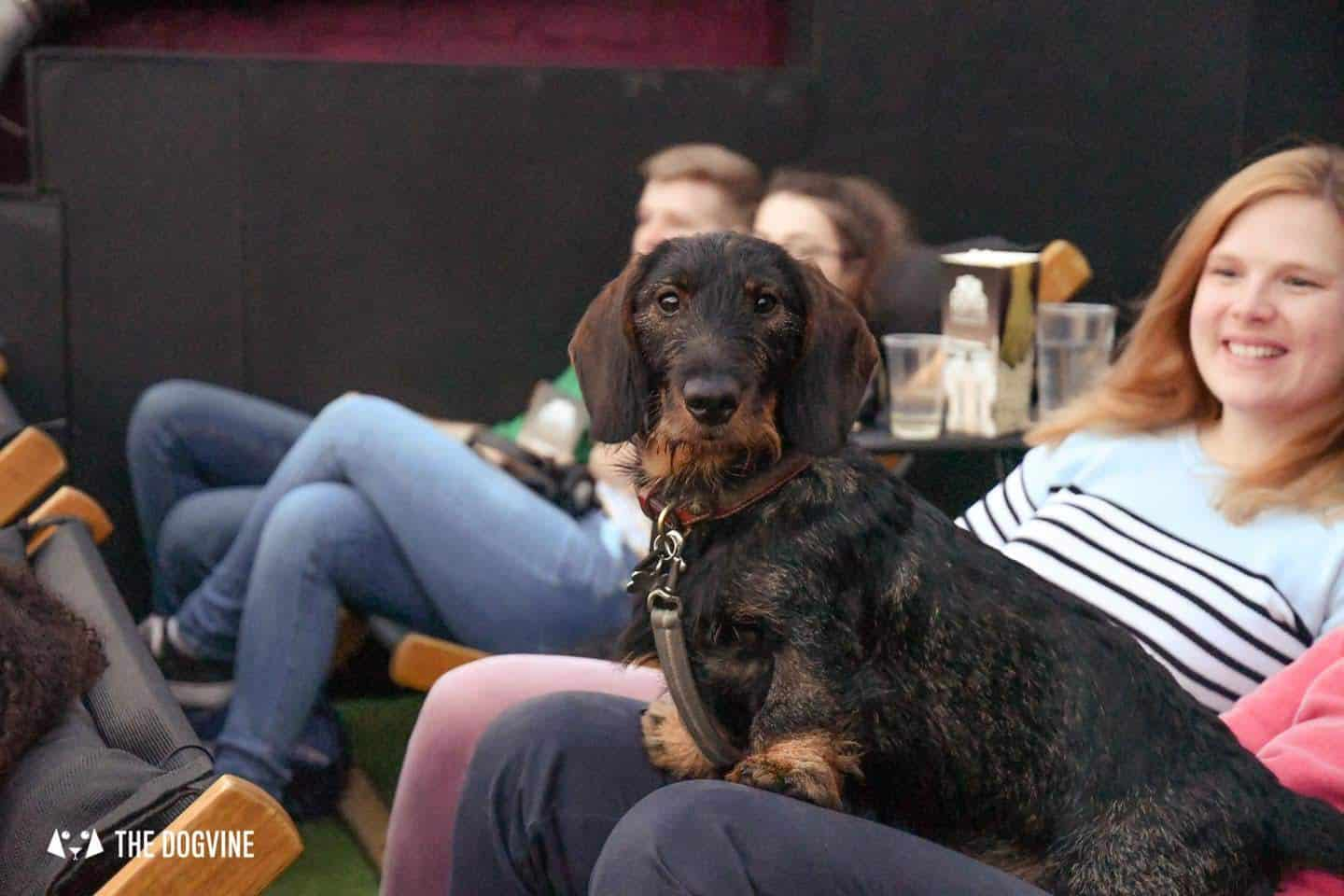Spectacular Movie Moments at the Dog-friendly Rooftop Film Club 48