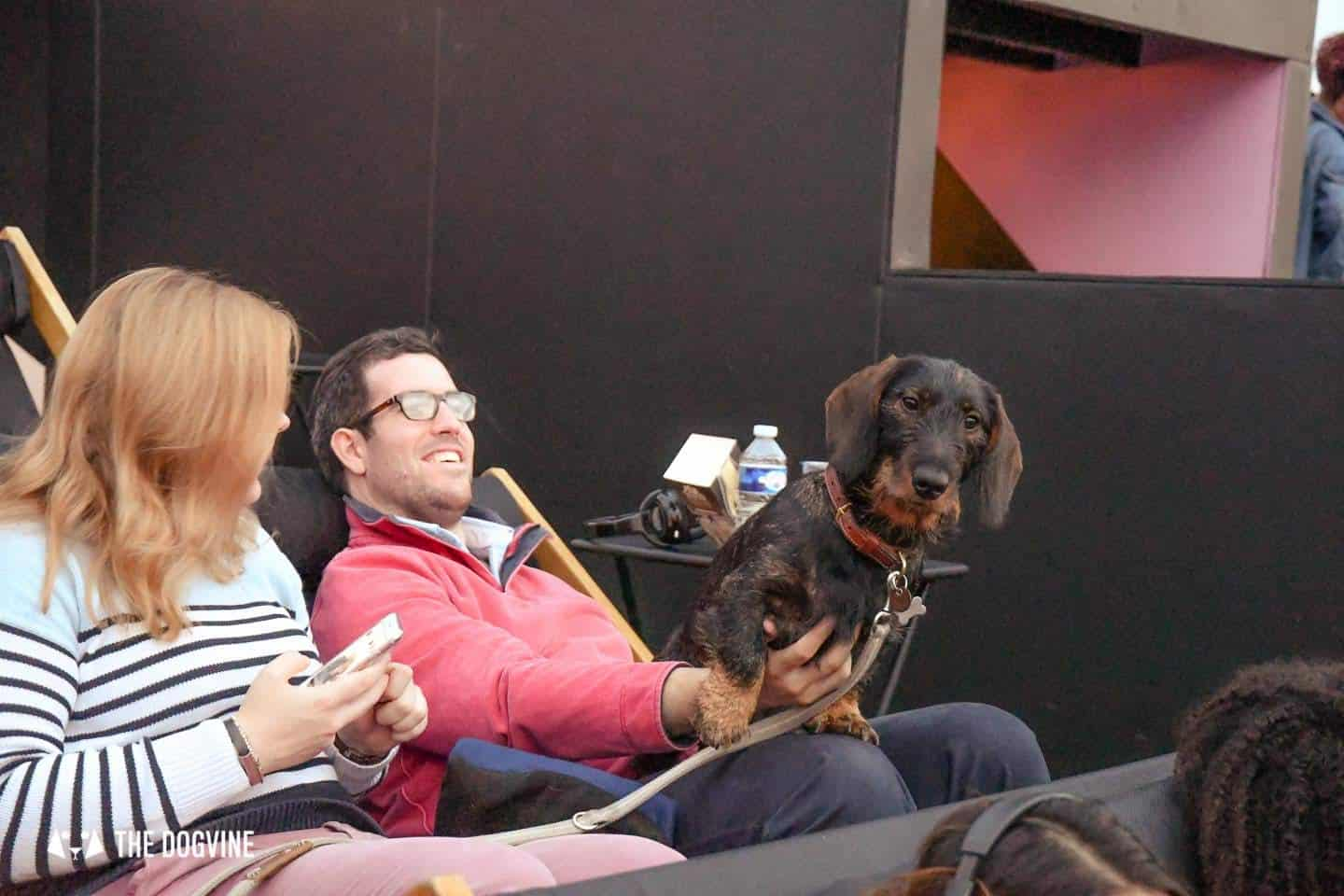 Spectacular Movie Moments at the Dog-friendly Rooftop Film Club 49