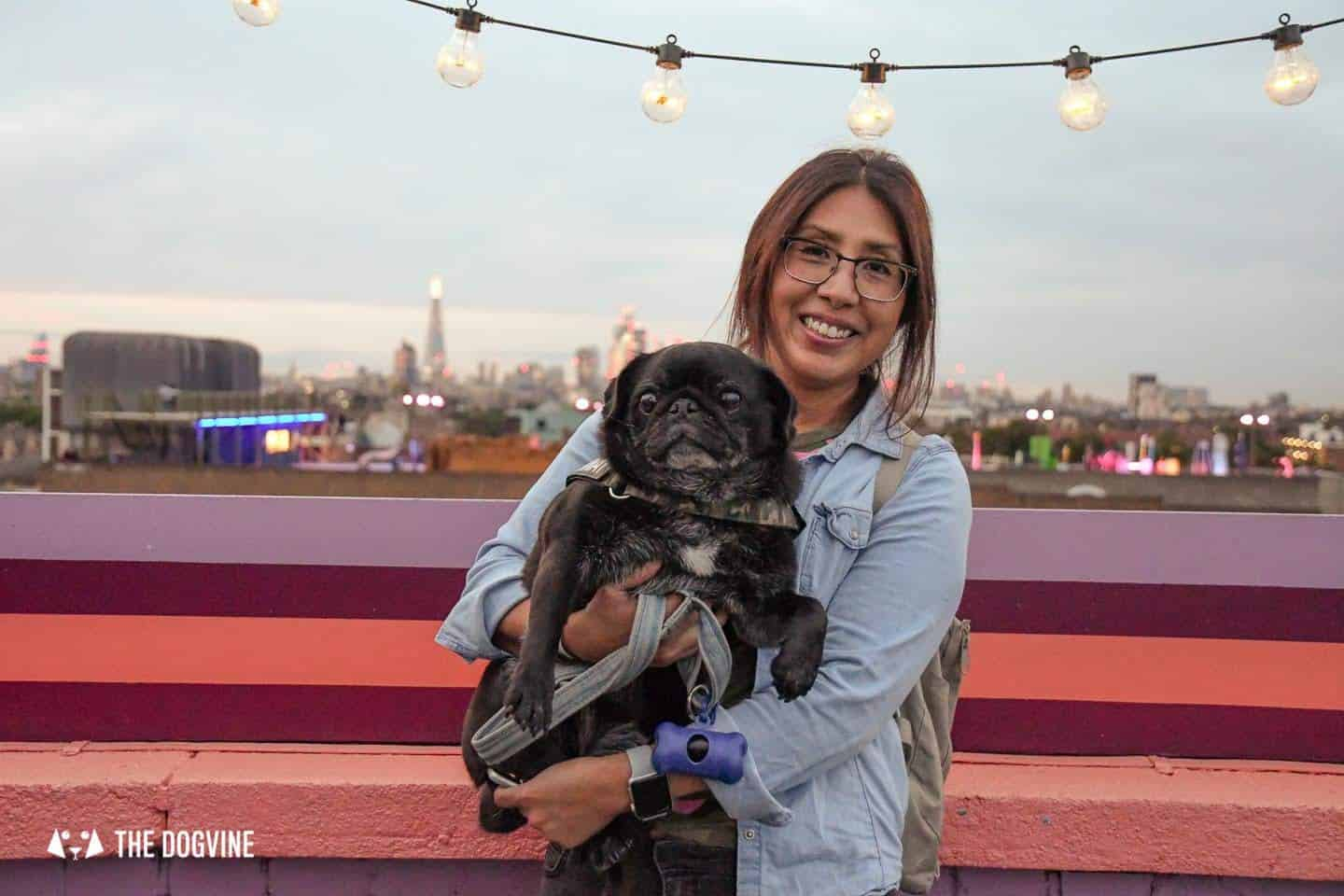 Spectacular Movie Moments at the Dog-friendly Rooftop Film Club 50