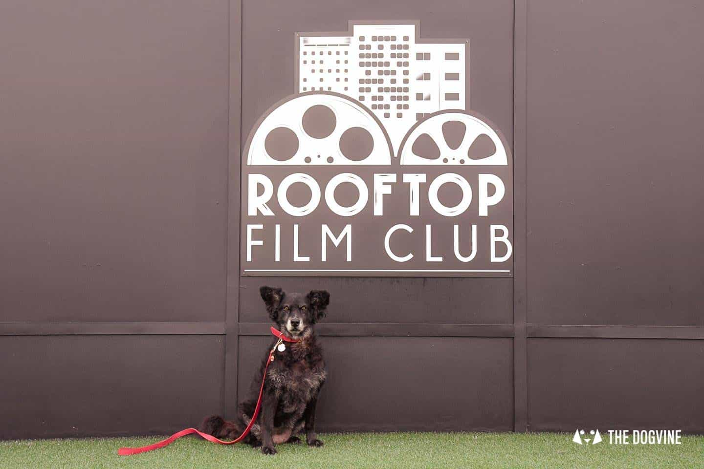 Spectacular Movie Moments at the Dog-friendly Rooftop Film Club 9