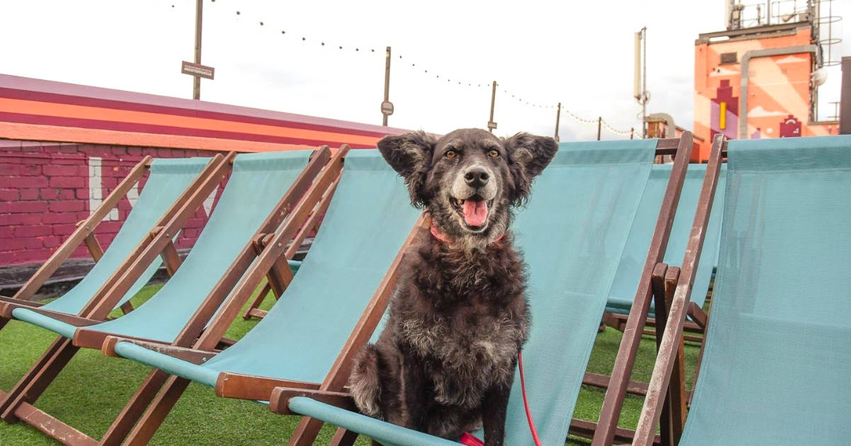 Spectacular Movie Moments at the Dog-friendly Rooftop Film Club