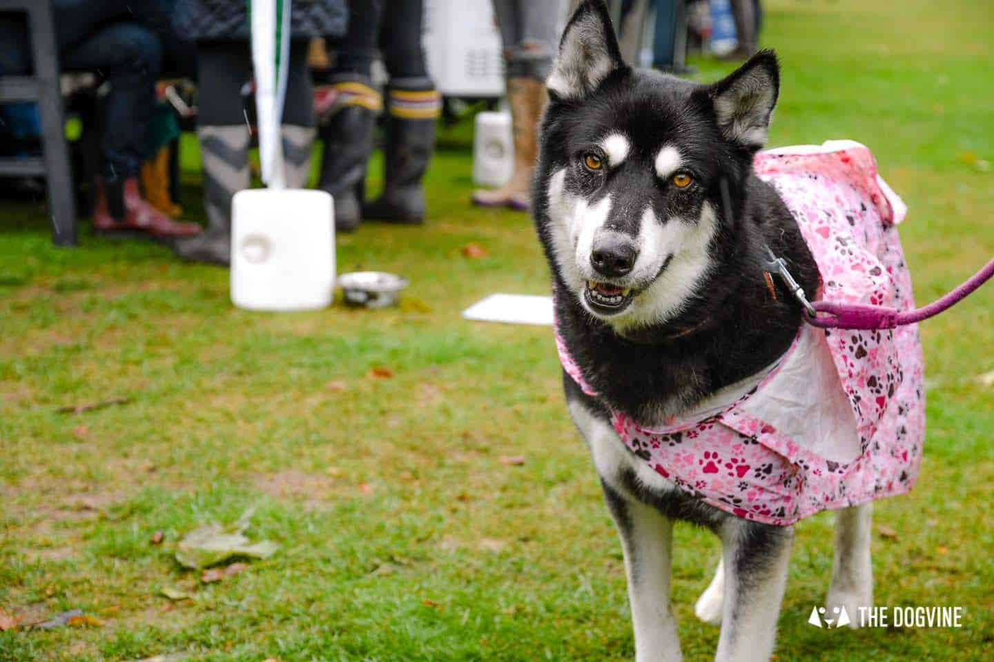The Chiswick House Dog Show 1