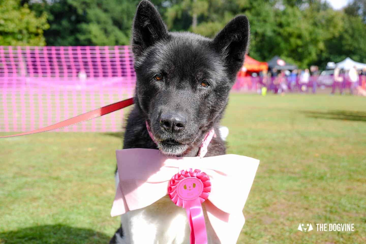 The Chiswick House Dog Show 12