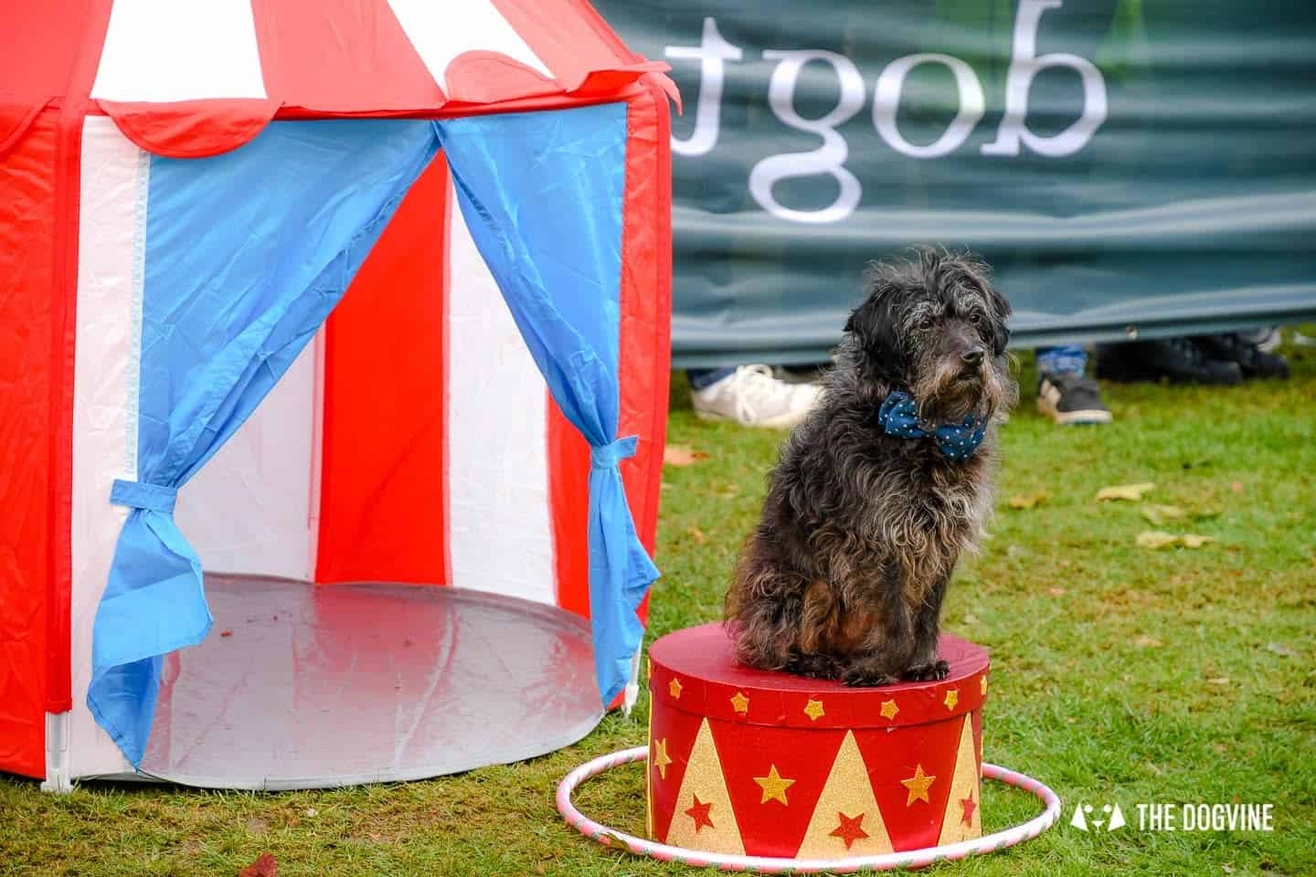 The Chiswick House Dog Show 13