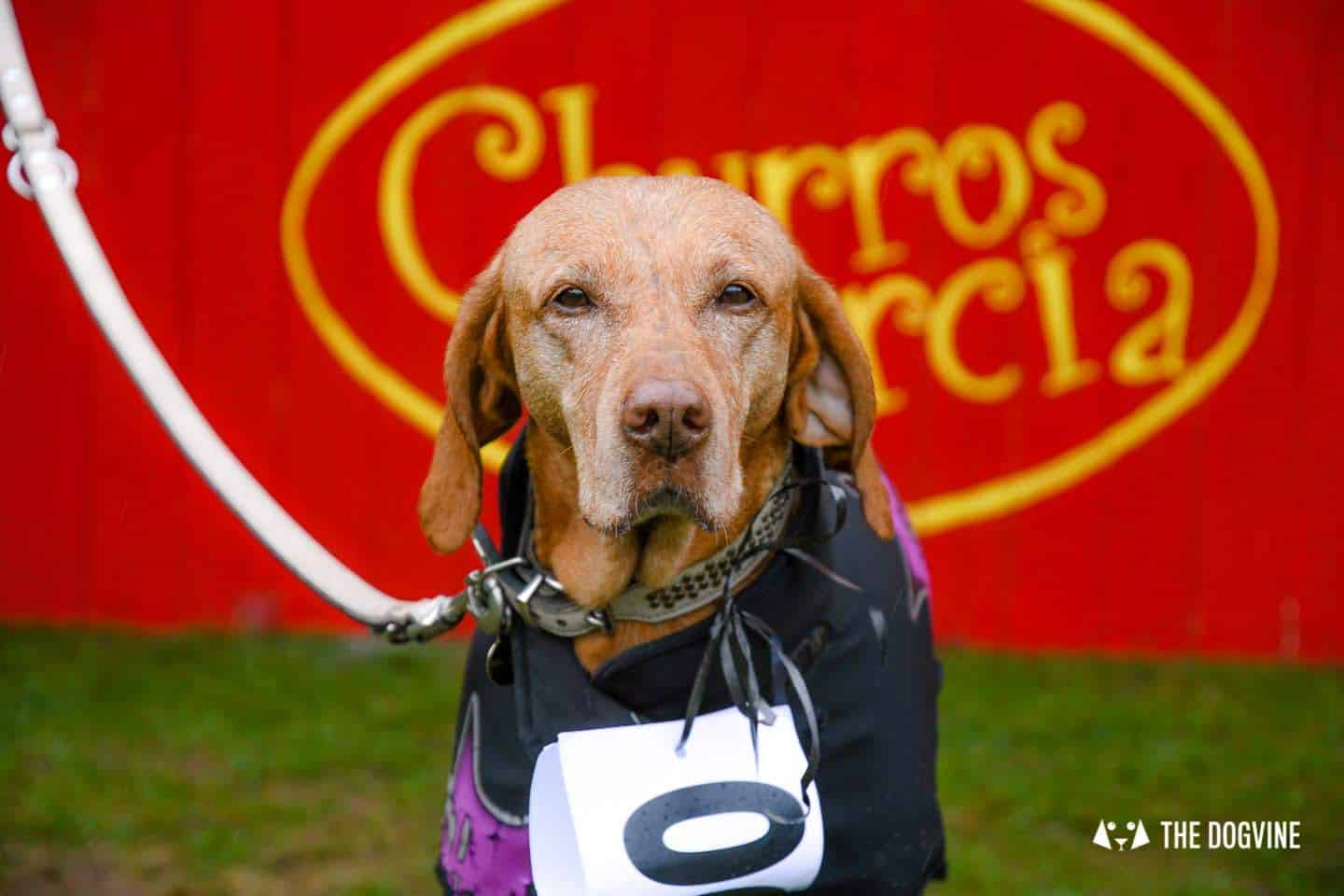 The Chiswick House Dog Show 4