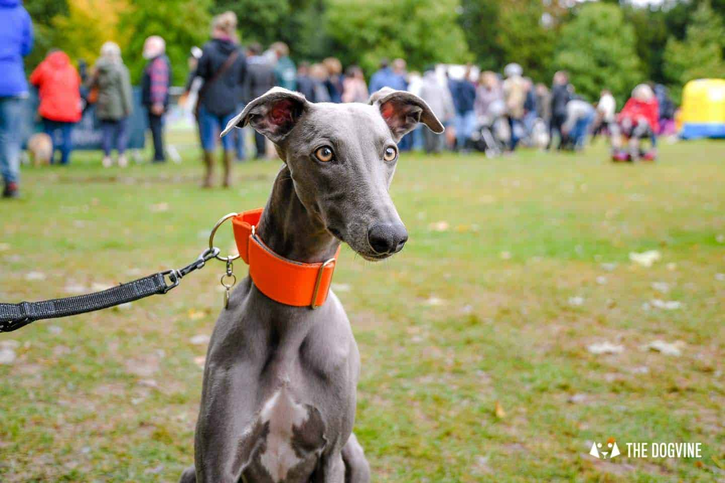 The Chiswick House Dog Show 7