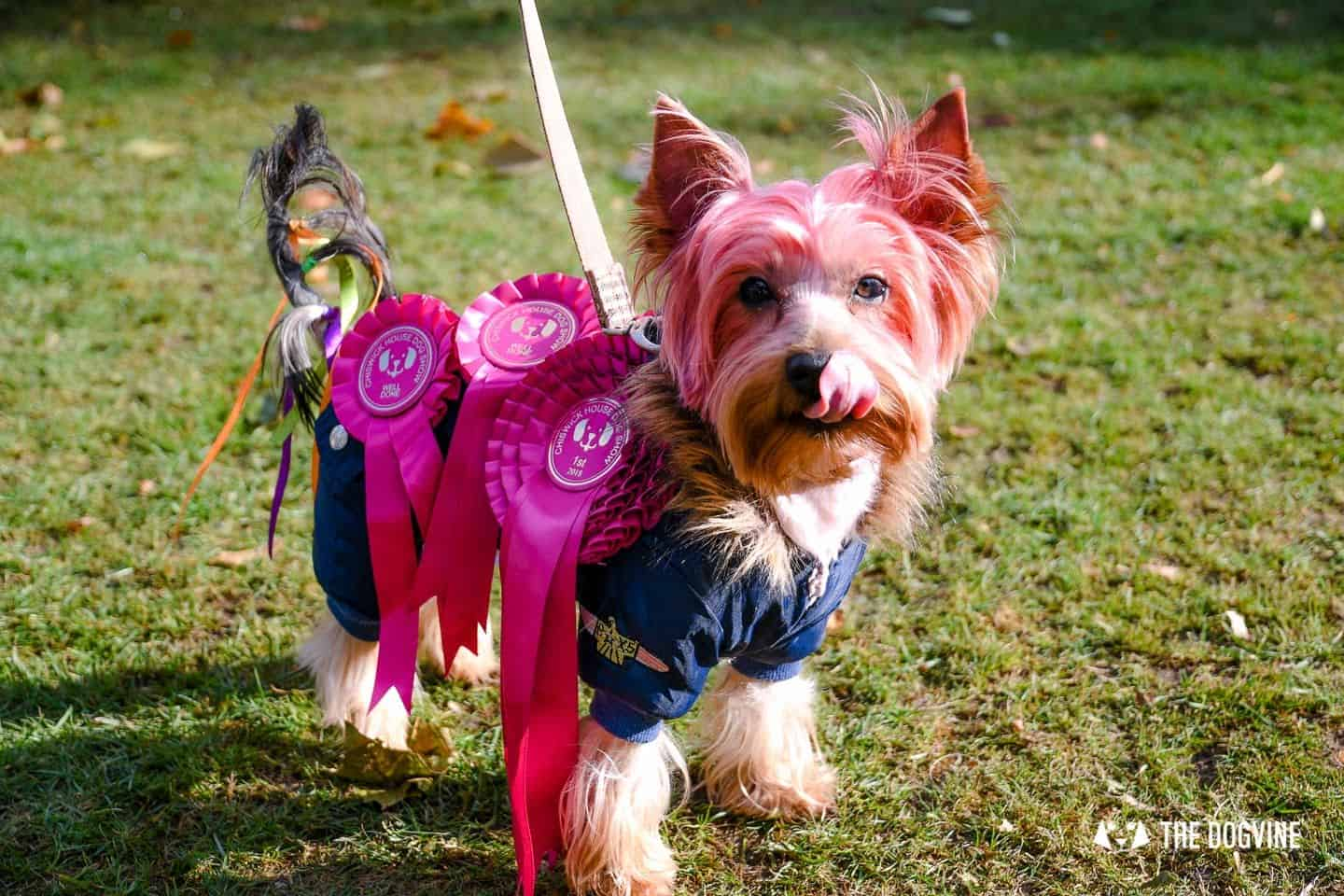 The Chiswick House Dog Show Best in Show 1