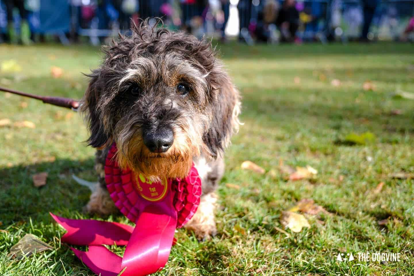 The Chiswick House Dog Show Best in Show 3