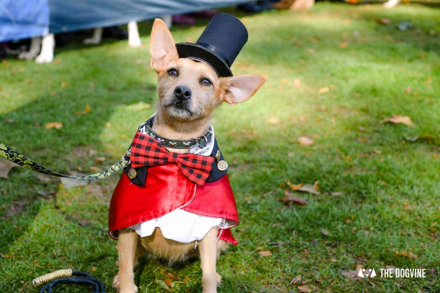 The Chiswick House Dog Show Fancy Dress 1