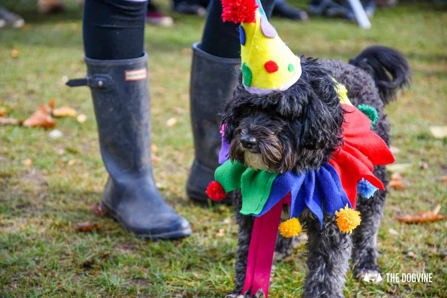 The Chiswick House Dog Show Fancy Dress 2