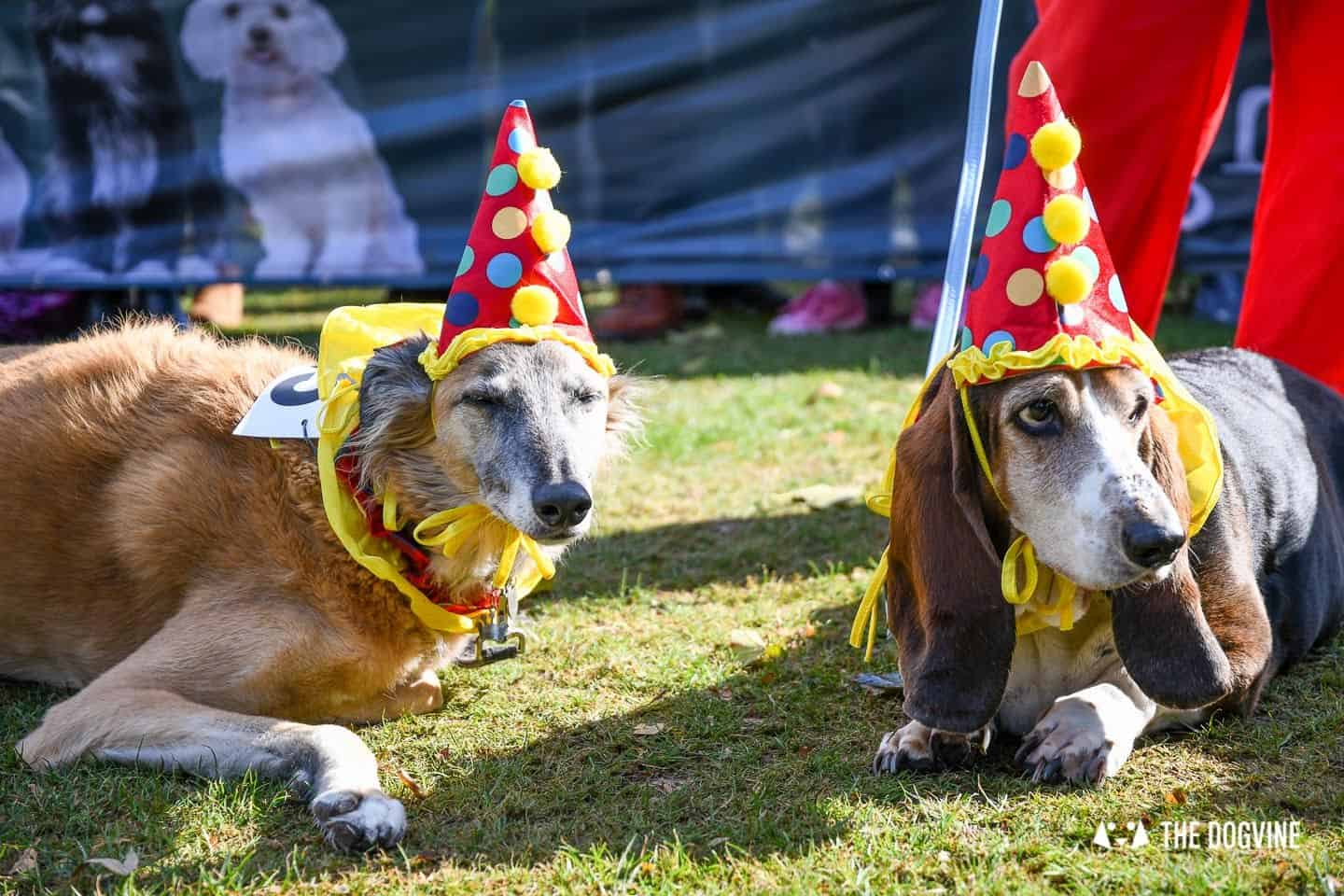 The Chiswick House Dog Show Fancy Dress 3