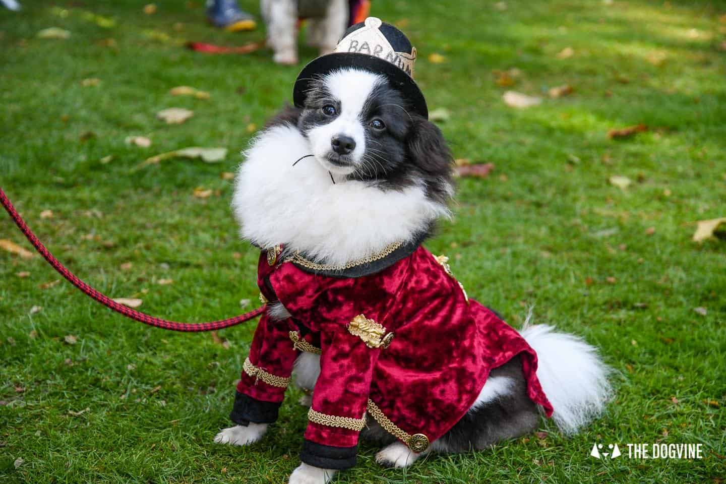 The Chiswick House Dog Show Fancy Dress 5