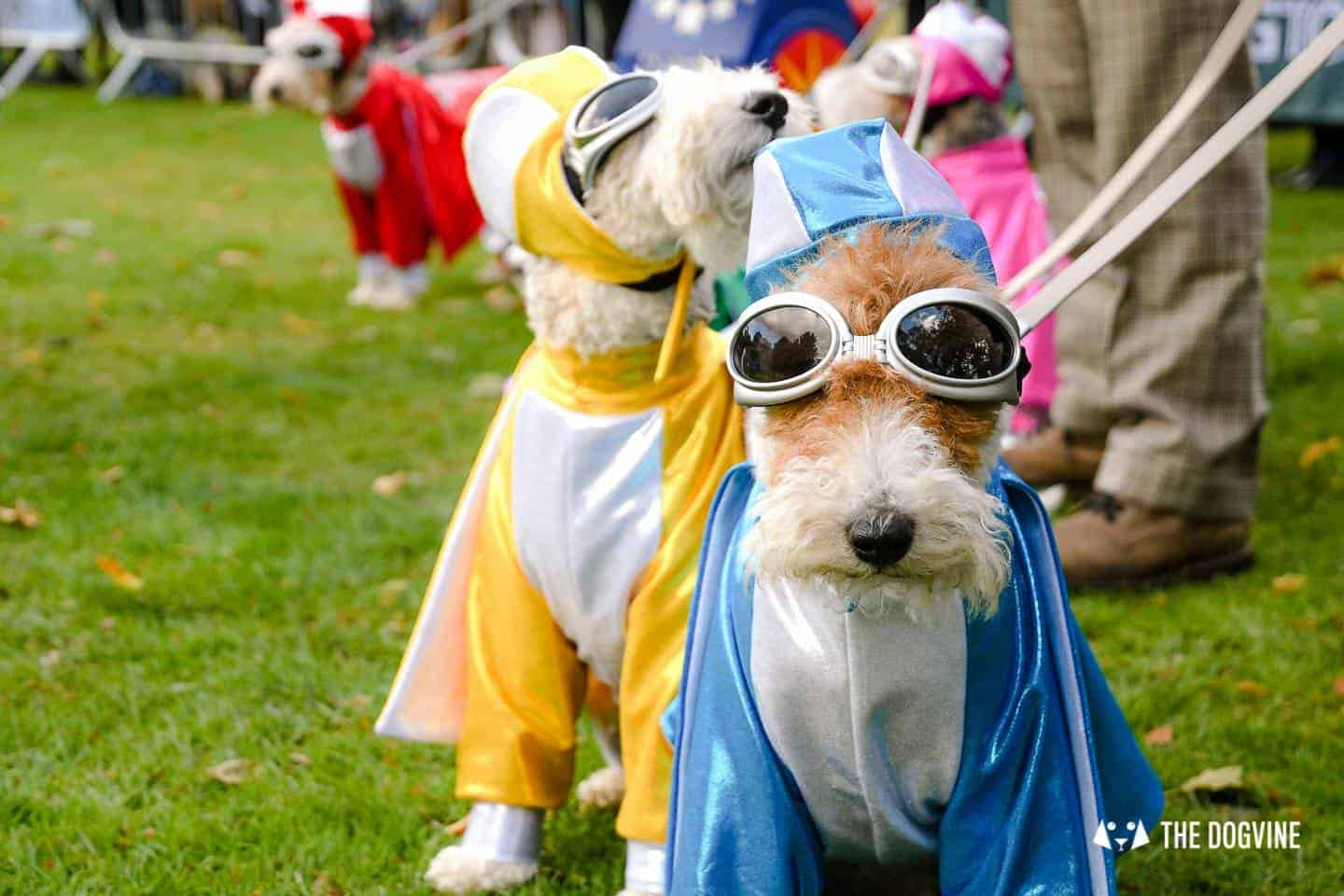 The Chiswick House Dog Show Fancy Dress 6