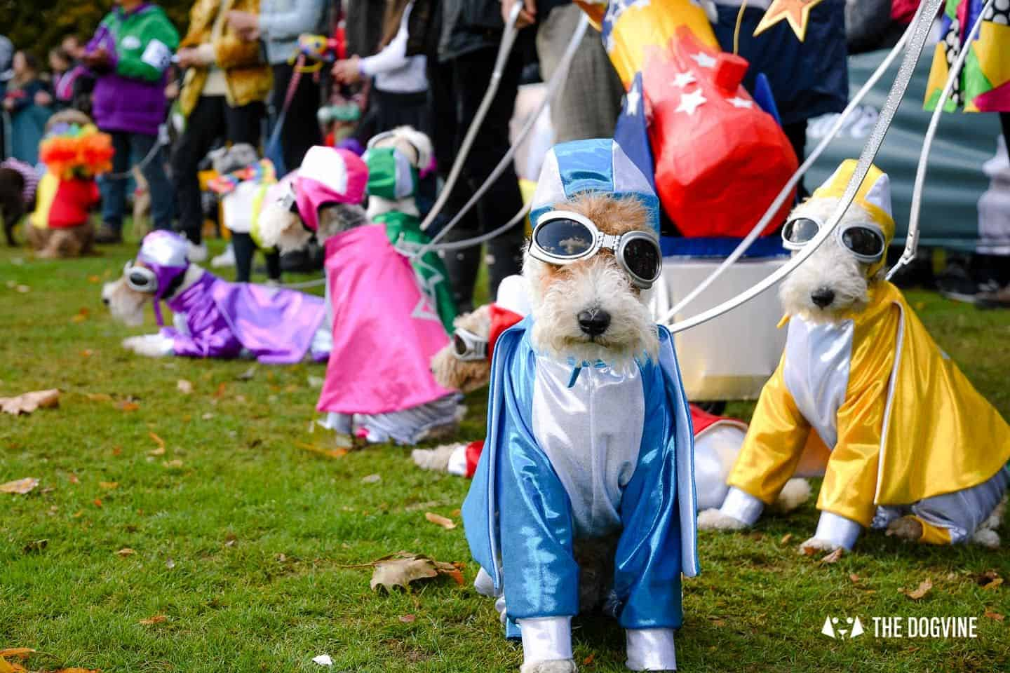 The Chiswick House Dog Show Fancy Dress 9