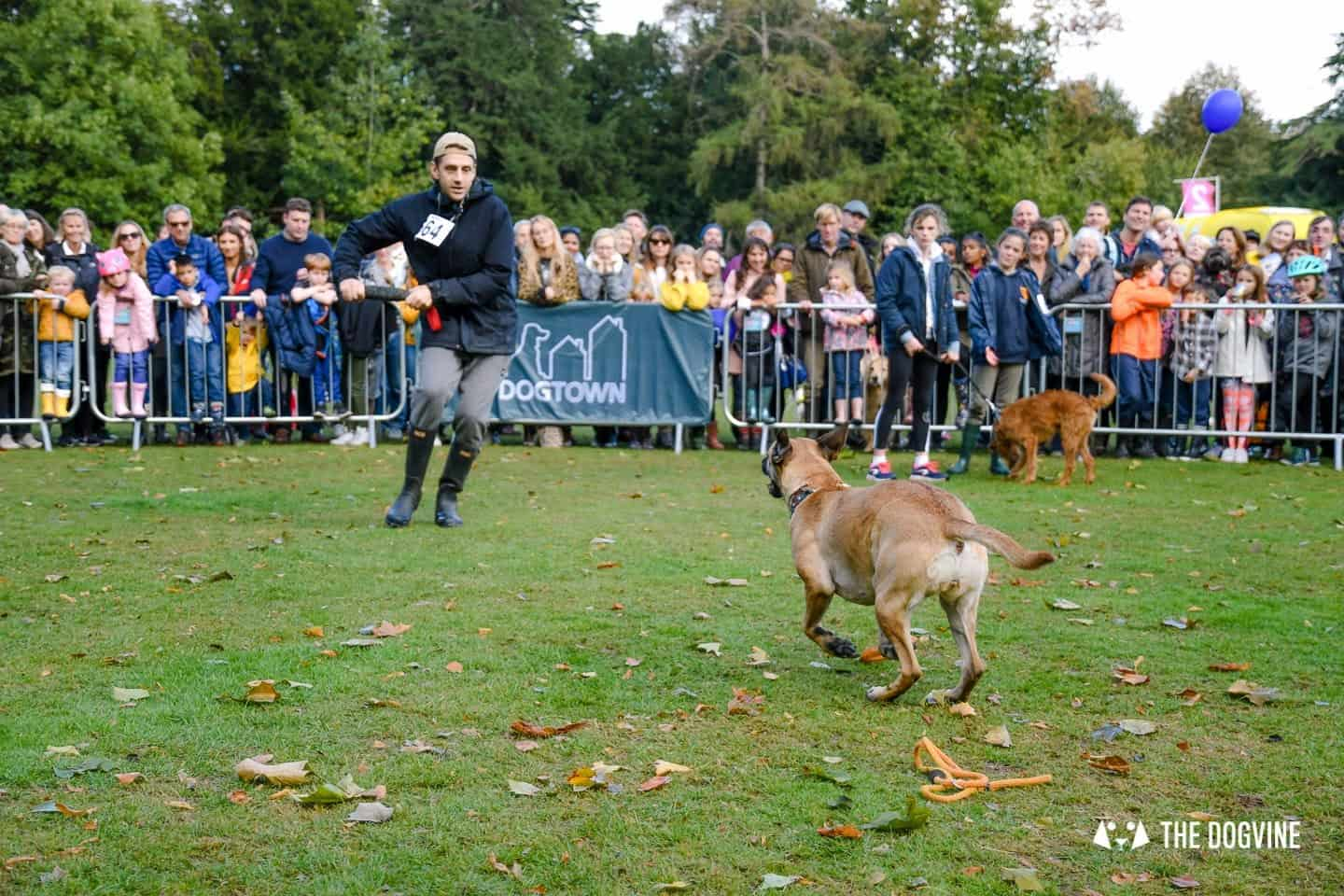 The Chiswick House Dog Show My Dog's Got Talent 5