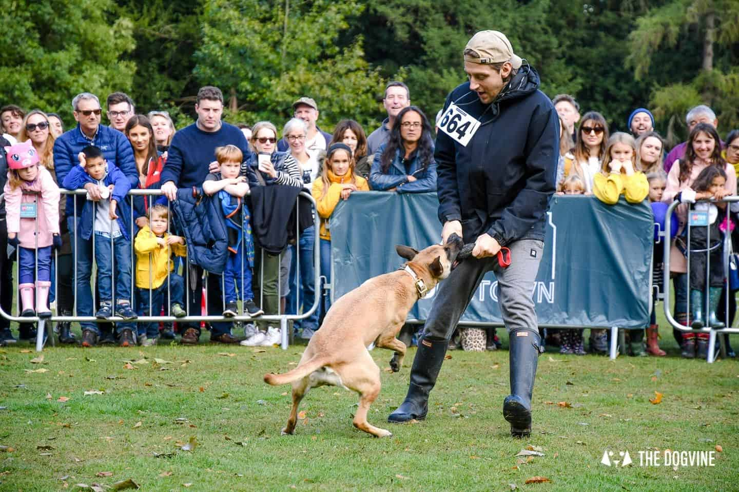 The Chiswick House Dog Show My Dog's Got Talent 6