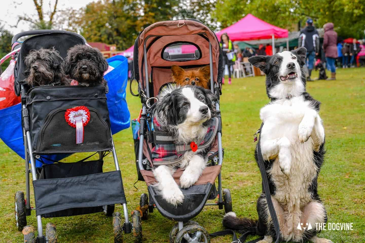 The Chiswick House Dog Show - The Dog Stroller Crew