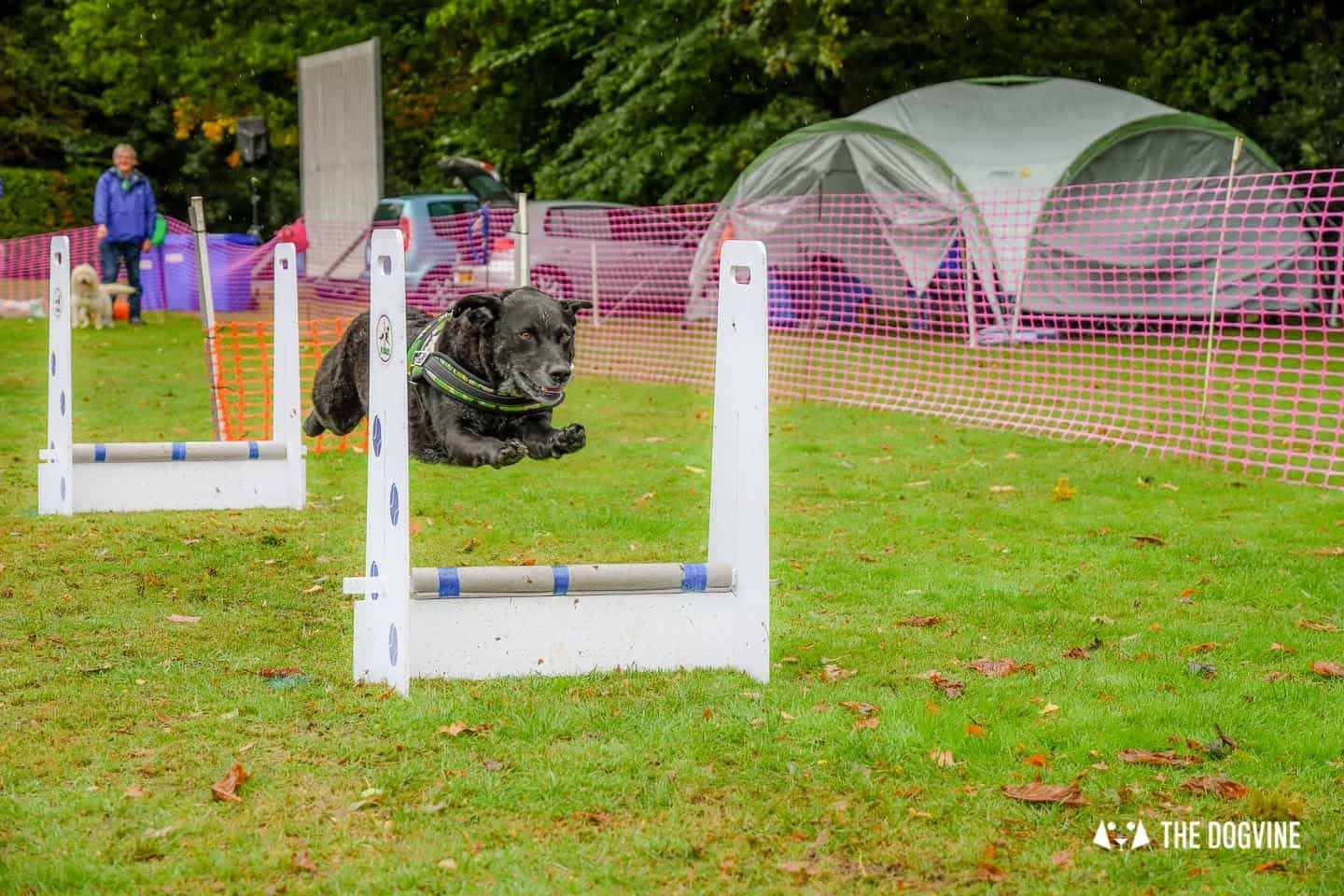 The Chiswick House Dog Show Womballs Flyball 4