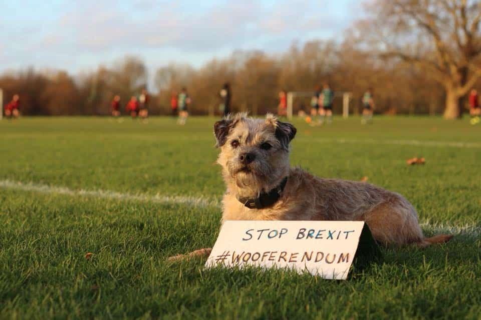 Dogs Against Brexit Wooferendum March