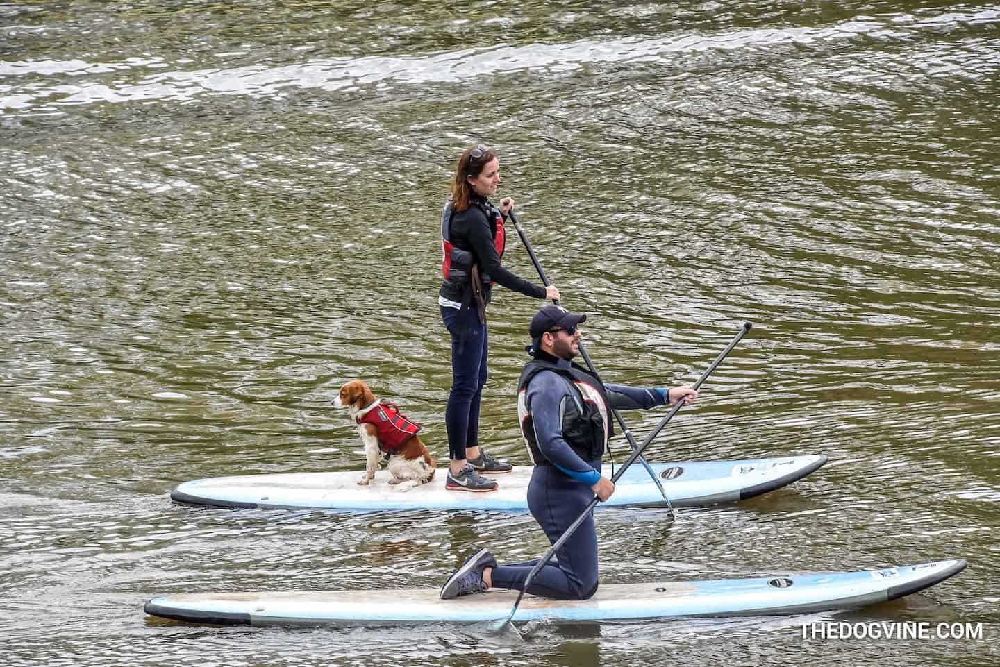 Your London Dog Events Agenda for 08-09 September - Dog and Human Paddle Boarding 1