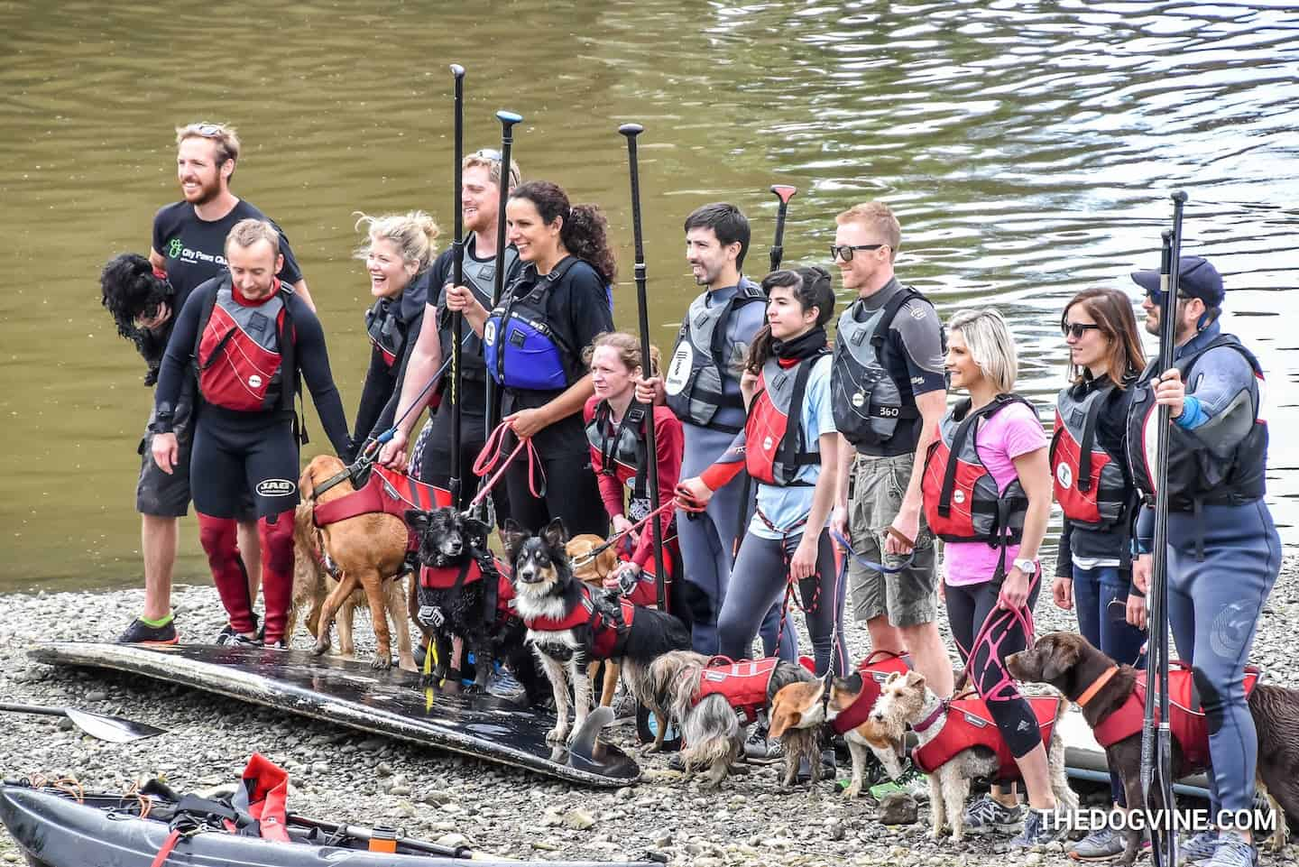 Your London Dog Events Agenda for 08-09 September - Dog and Human Paddle Boarding 2