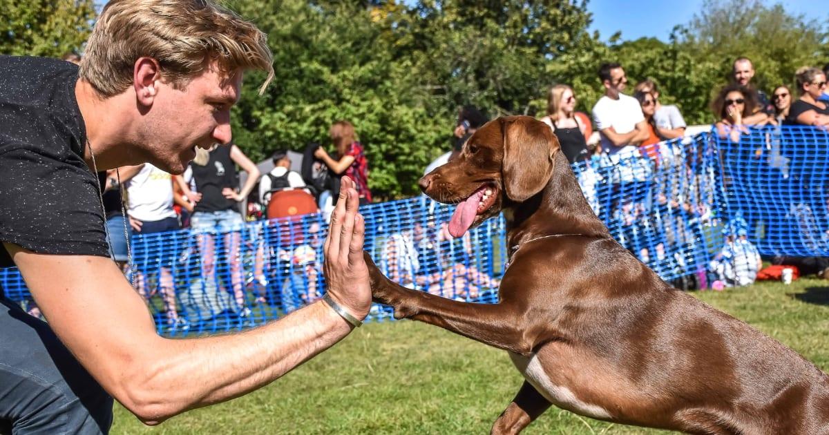 Your London Dog Events Agenda for 08-09 September