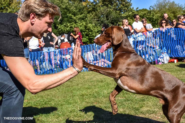 Your London Dog Events Agenda for 08-09 September - Victoria Park Dog Show 2