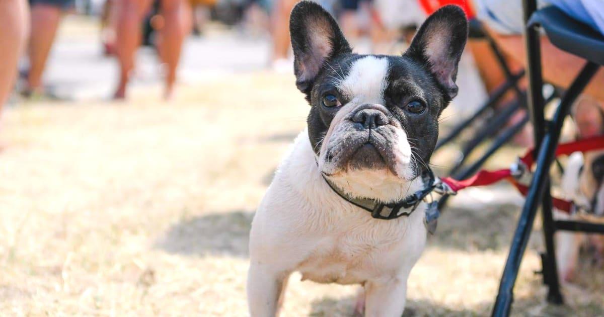 Your London Dog Events Agenda for 14-16 September