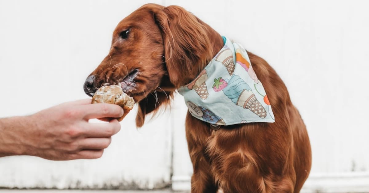 Your London Dog Events Agenda for 28-30 September