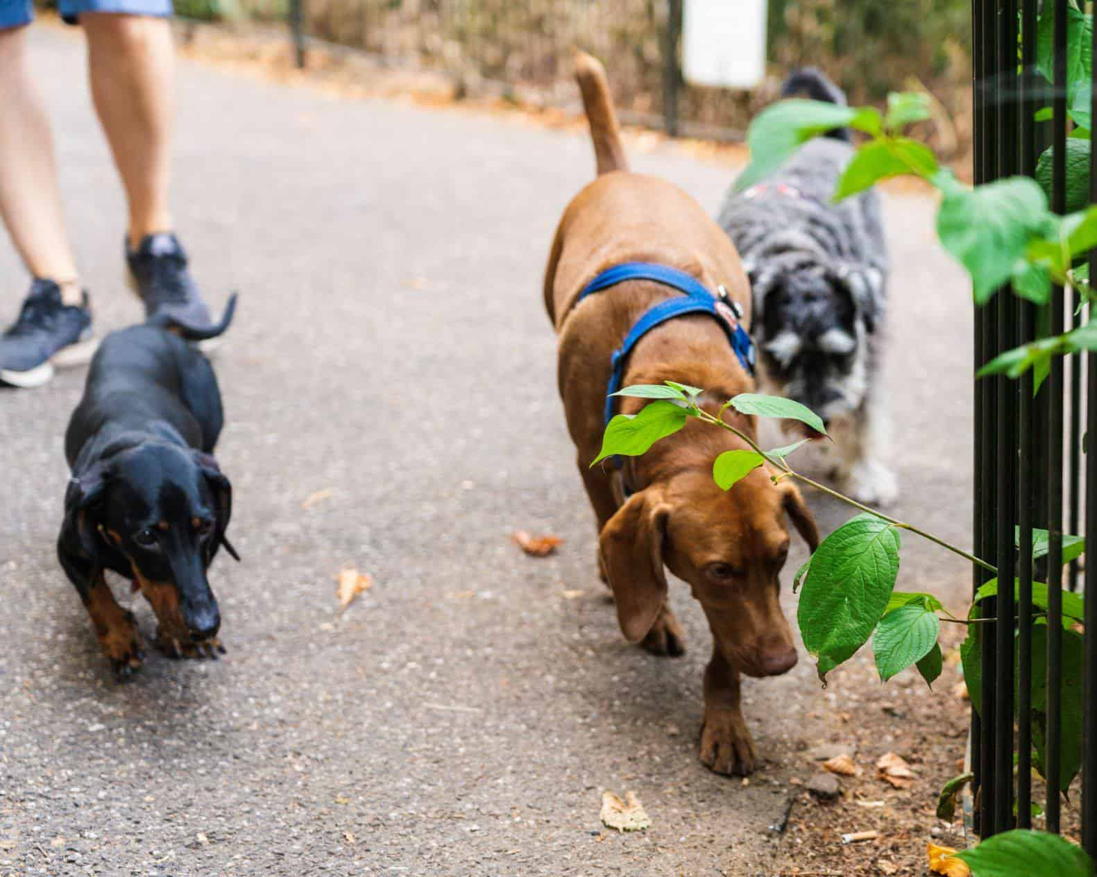 Charity Dog Walk In Battersea Park October Edition