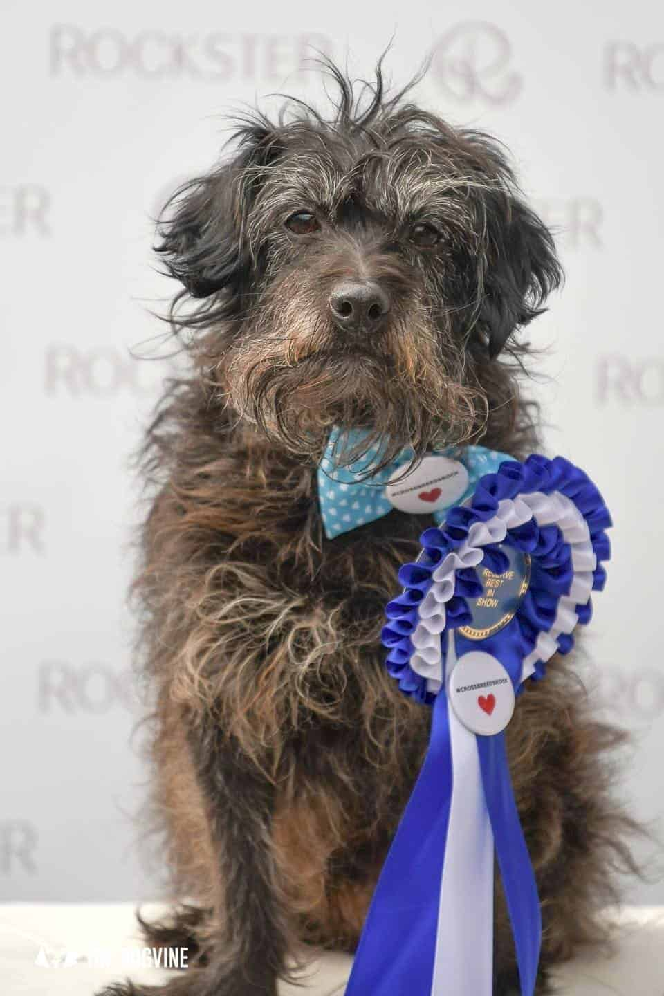 Crossbreeds & Rescue Dogs in the Spotlight at the Crossbreed Café 16