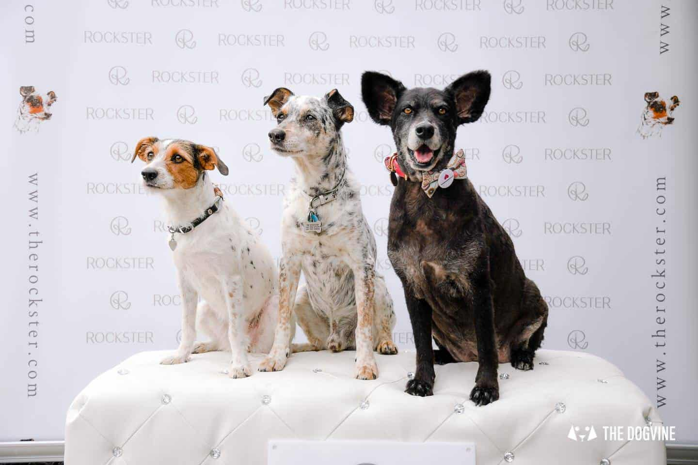 Crossbreeds & Rescue Dogs in the Spotlight at the Crossbreed Café 18