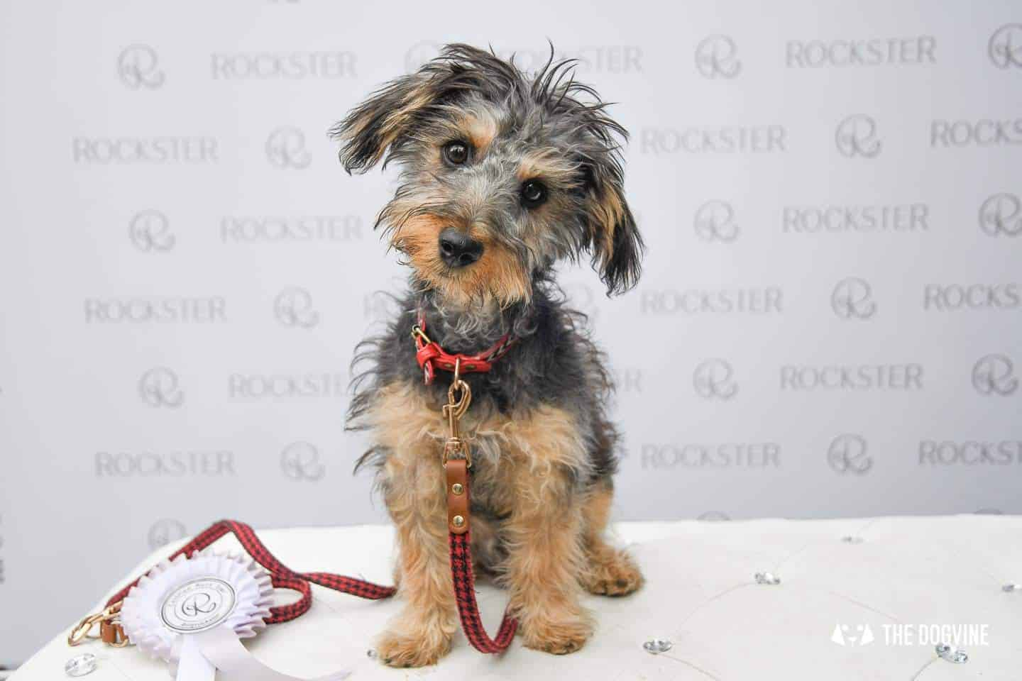 Crossbreeds & Rescue Dogs in the Spotlight at the Crossbreed Café 19