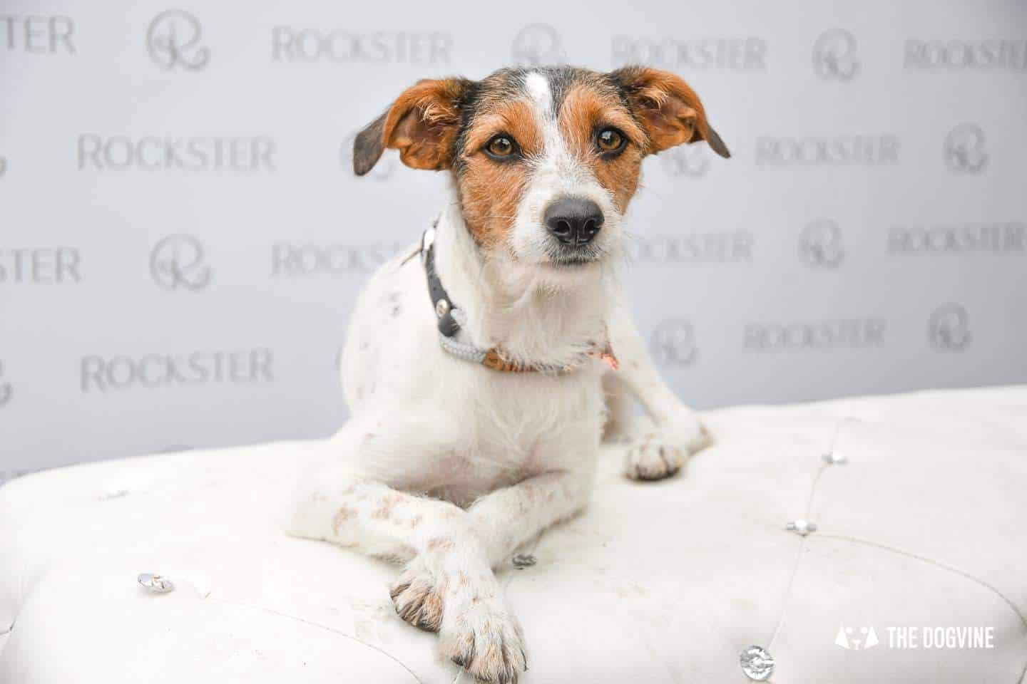Crossbreeds & Rescue Dogs in the Spotlight at the Crossbreed Café 22