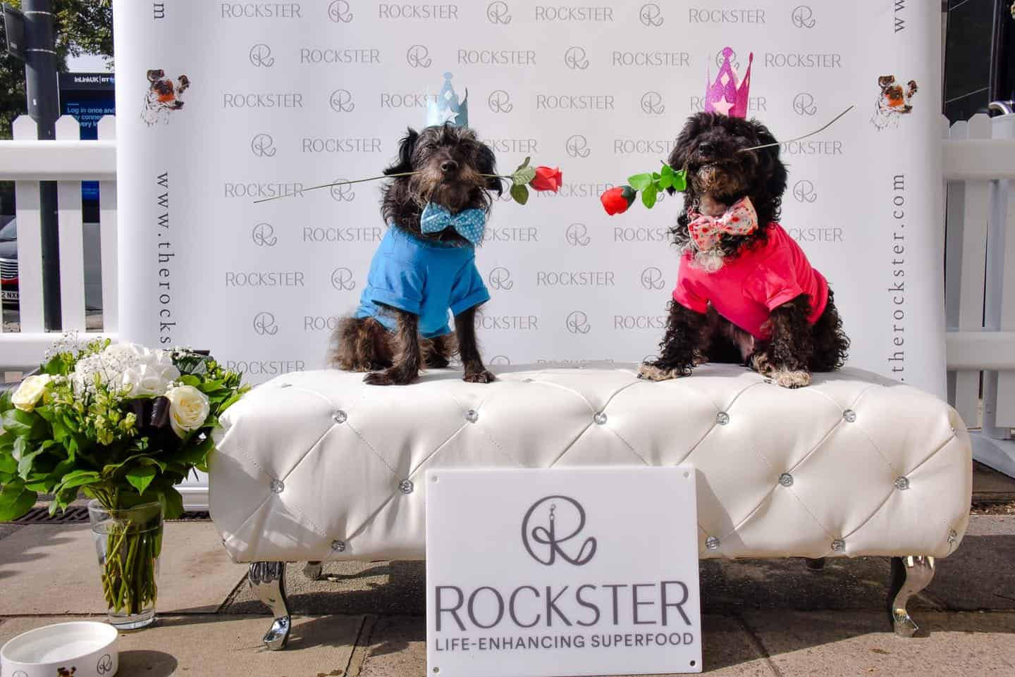 Crossbreeds & Rescue Dogs in the Spotlight at the Crossbreed Café 23