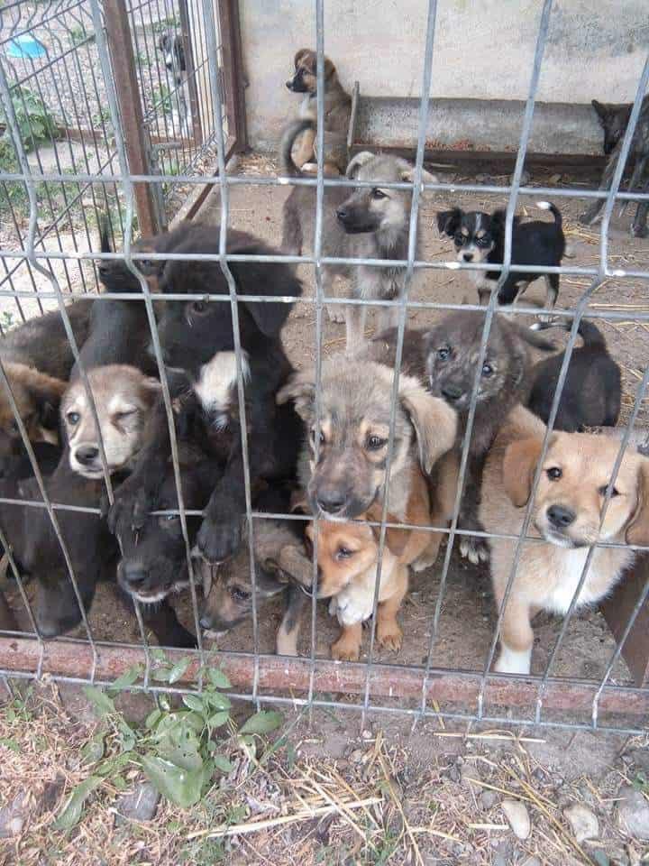 Crossbreeds & Rescue Dogs in the Spotlight at the Crossbreed Café - Ajud Public Shelter Romania