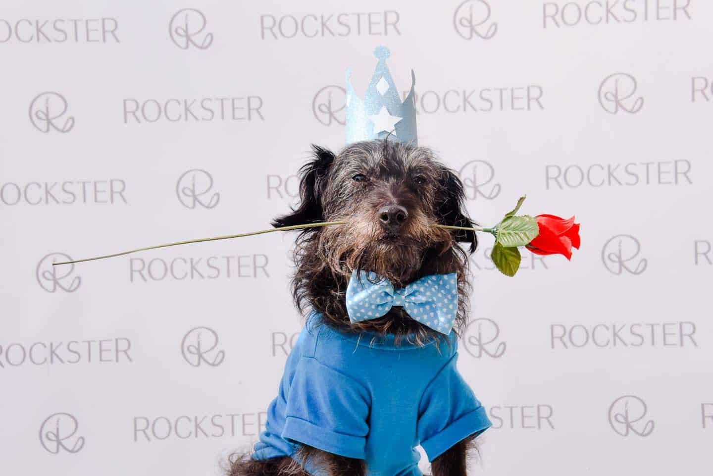 Crossbreeds & Rescue Dogs in the Spotlight at the Crossbreed Café - Doodles