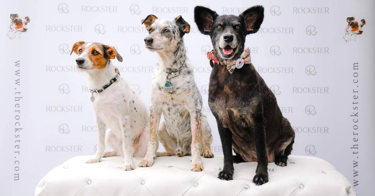 Crossbreeds & Rescue Dogs in the Spotlight at the Crossbreed Café