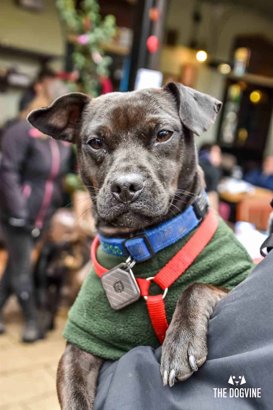 Dog Events In London This Month November 2018 - Dogs getting ready for Christmas