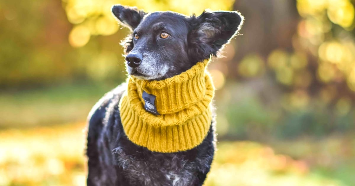 Dog Events In London This Month November 2018
